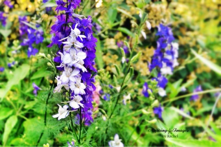 2011-04-21-BlueWhite-Flowers