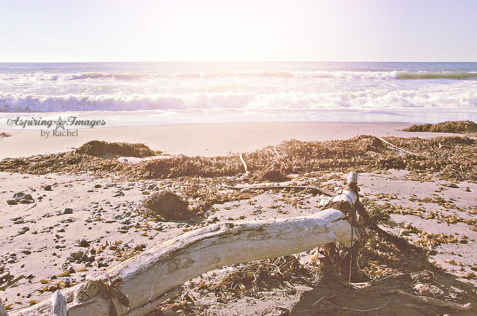 California Beach Alcove with Large Driftwood by Aspiring Images by Rachel