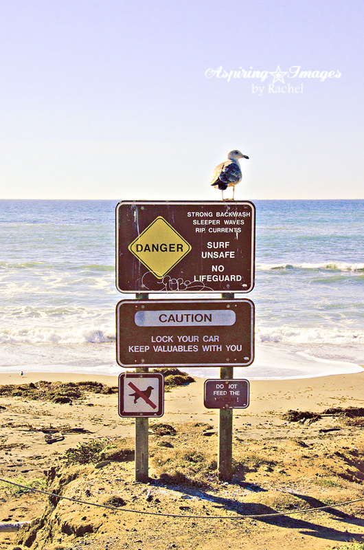 Seagull On The Beach Sign by Aspiring Images by Rachel